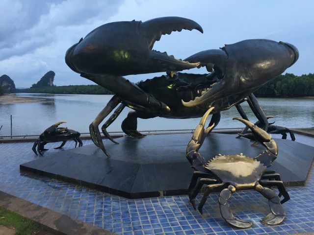 Krabi mud crab