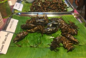 Bangkok fried giant water bug